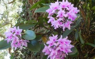 Как выглядит орхидея. Виды орхидей фото
