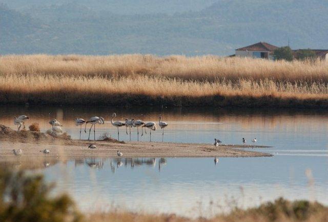 фламинго в природе фото