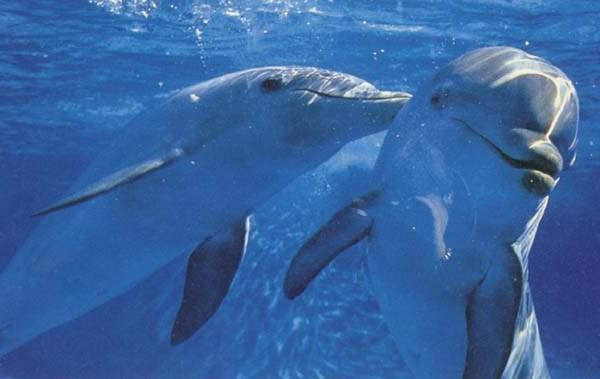 изображение дельфинов