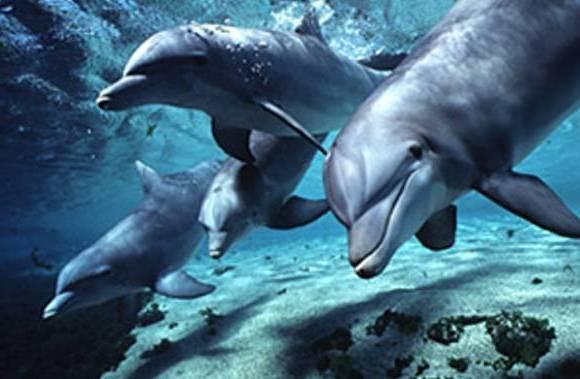 дельфины в картинках