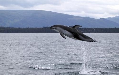 дельфин на фото