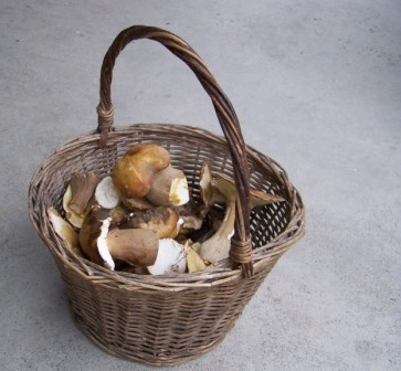 Белый гриб фото