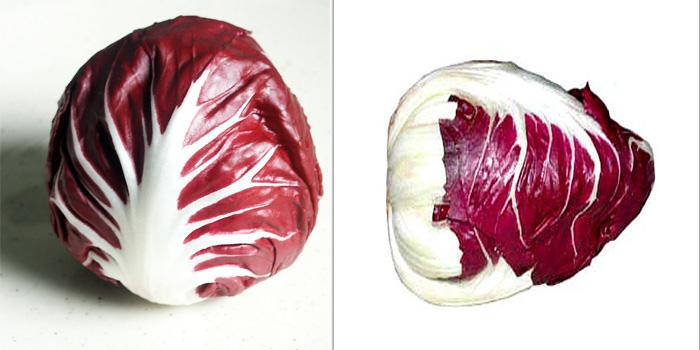 итальянский цикорий (ридичио) фото