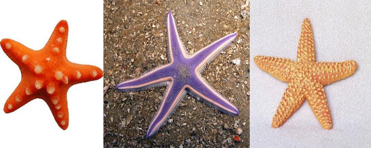 Как выглядит звезда давида