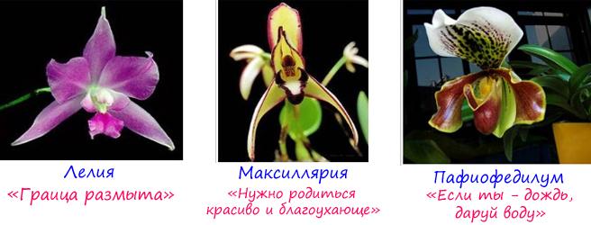 разновидности орхидей