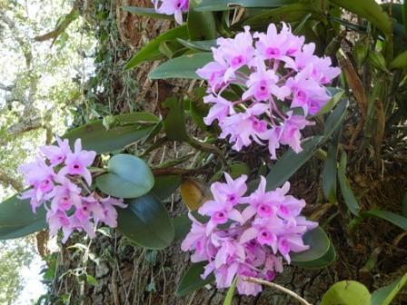 фотографии орхидей
